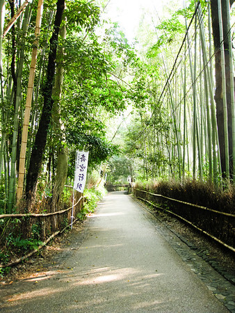 Here we are in the Sagano Bamboo Forest. These bamboo trees were HUGE.