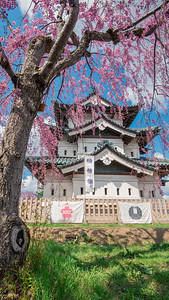 Hirosaki Castle Behind Pink Cherry Blossoms_Portrait