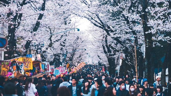 Crowds Of The Cherry Blossom Festival