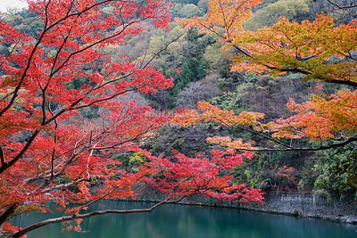 Colorful Trees at the Hozu River