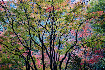 Forest scene in Arashiyama, Kyoto