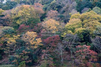 Arashi Mountain, Kyoto