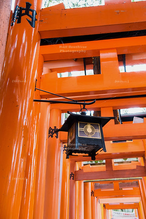Torii gates with lantern