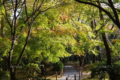 Lush garden at Ryōan-ji, Kyoto