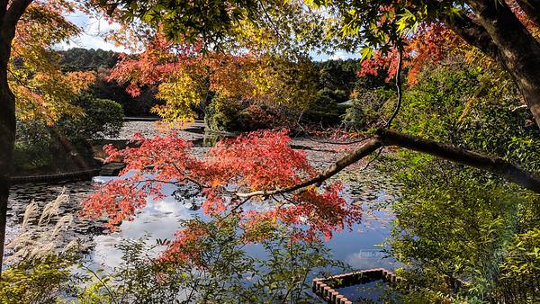 The garden at Ryōan-ji, Kyoto