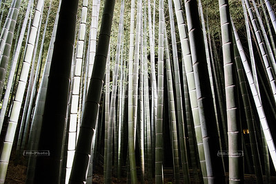 Bamboo forest at Shoren-in temple