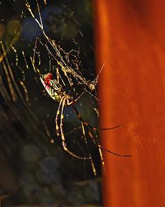 spider-3987web800