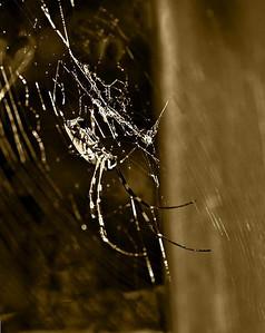 spider-3987monoWeb680