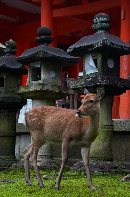 A deer in the shrine.