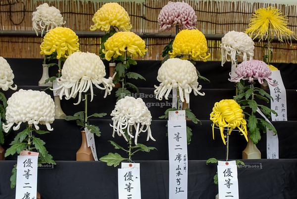 Tokyo Metropolitan Tourism Chrysanthemum Exhibition