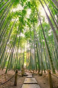 Hokokuji Bamboo Grove