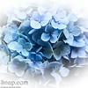 Blue Flowers Vignette