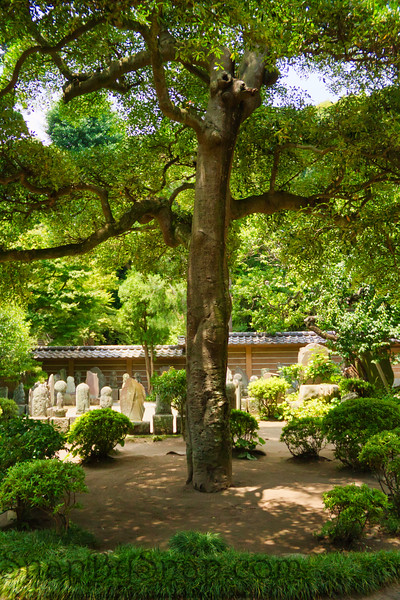 Tree in Japanese Cemetery