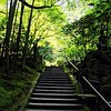 Bamboo Forest and stairs