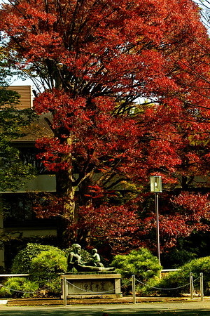 kyoto autumn shrine