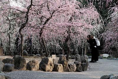 kyoto jonangu