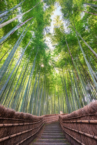 Stair Path Through A Bamboo Grove In Kyoto Japan