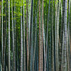 Looking Through A Bamboo Forest