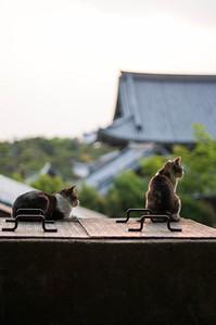 Kyoto-25