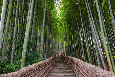 Path Through A Bamboo Grove
