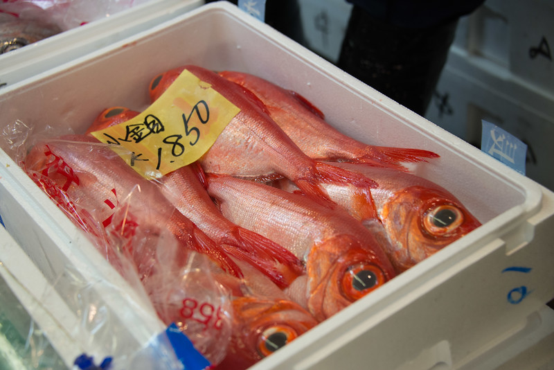 Tokyo Fish Market-6949