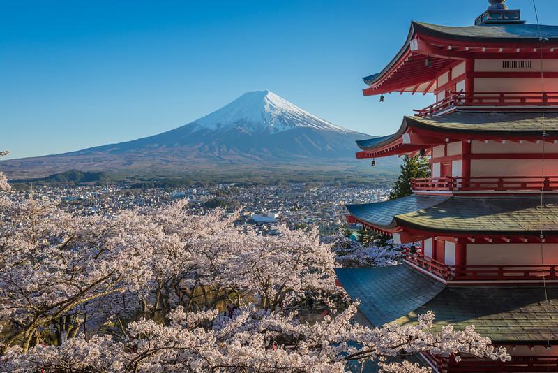 Chureito Pagoda And Fuji At Full Bloom