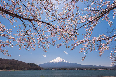 Sakura and Mt Fuji