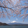 Sakura and Mt Fuji