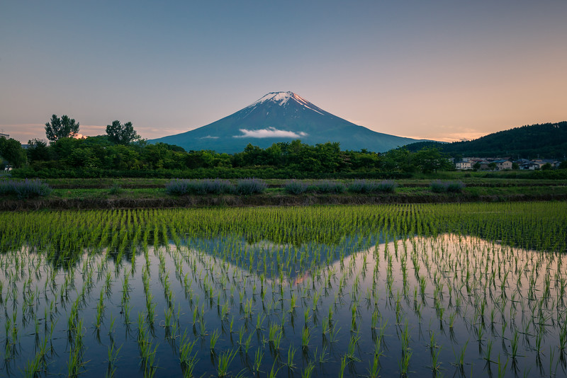 Mt Fuji And Rice Fields