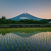 Mt Fuji And Rice Fields