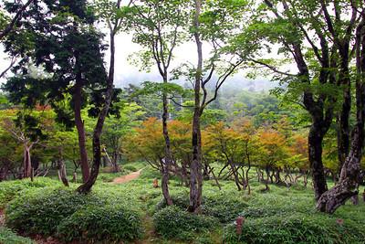 Oodaigahara