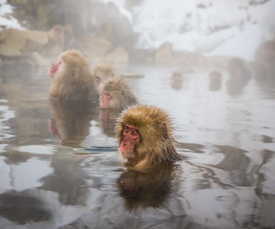 Snow Monkeys of Jigokudani Yaenkoen
