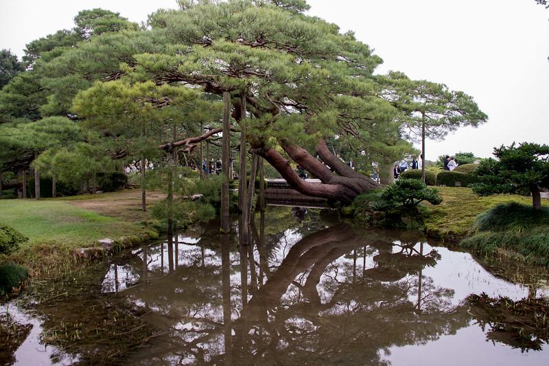 Kenroku Gardens Kanazawa-9571