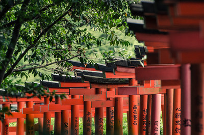 Descending Torii Gates at Nezu Shrine