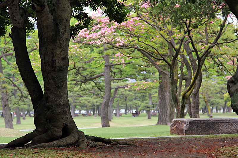 The outer grounds of Japan's Imperial Palace