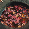 Leaves In A Stone Basin At Koishikawa Korakuen