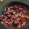 Leaves In A Stone Basin At Koishikawa Korakuen