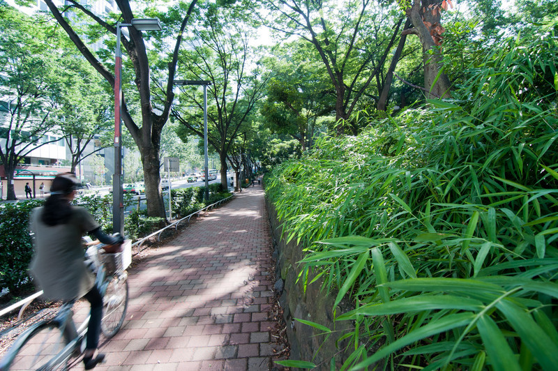 A short walk from our hotel, Shinjuku park.