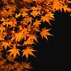 Fall Foliage Illuminated At Night