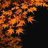 Autumn Flames
