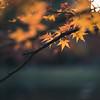 Orange Autumn Glow