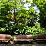 Benches in a Forest