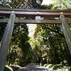 The (40 foot tall) gate to the park where the Meiji shine sits: this park is much larger (200+ acres) than Shinjuku park. This gate is made from 1500 year old cypress wood.