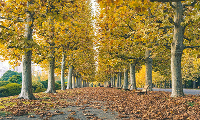 Row Of Autumn Trees In The City