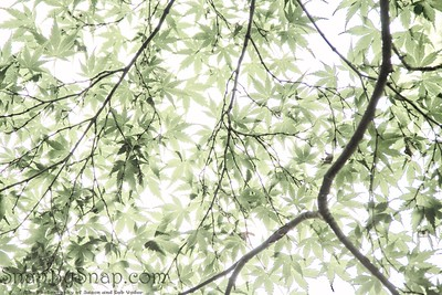 Overexposed Leaves