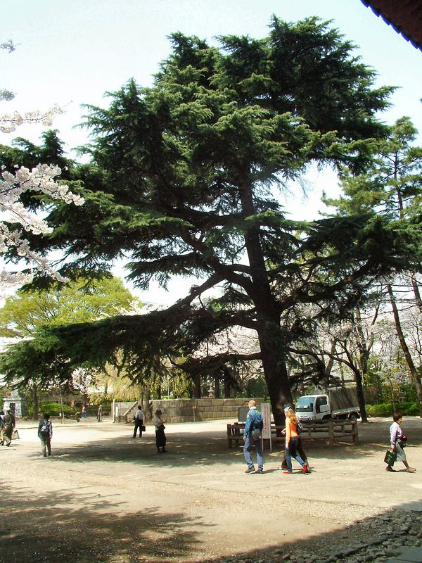 Zojoji is a large Budhist temple near where I used to work in Tokyo.  The pine tree seen here was planted by President Grant in 1879.