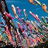 Koi Wind Socks