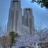 Tokyo Municipal building with Sakura blossoms.