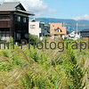 Pampas Grass and Buildings, Omi-Imazu, Shiga-Ken, Japan