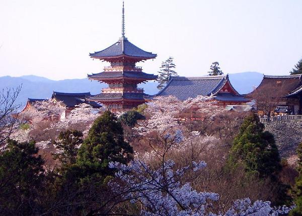 Kiyomizu-dera temple with sakura blossoms in Kyoto.